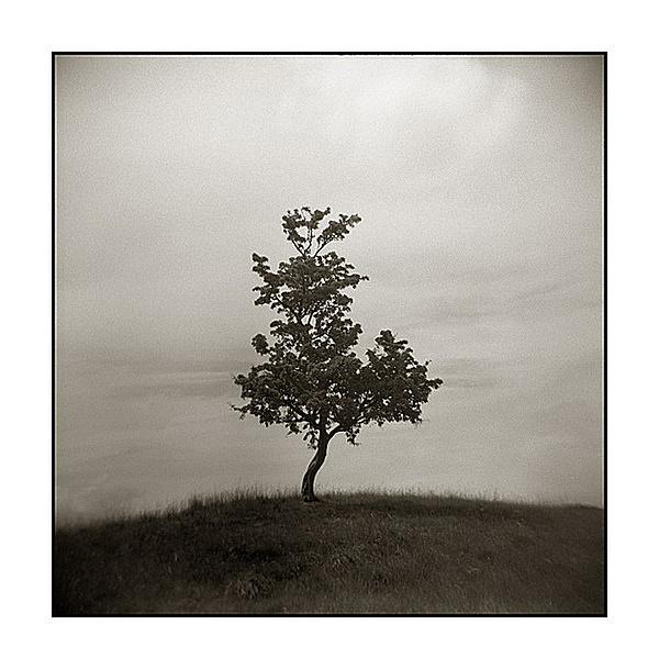 photo #tree