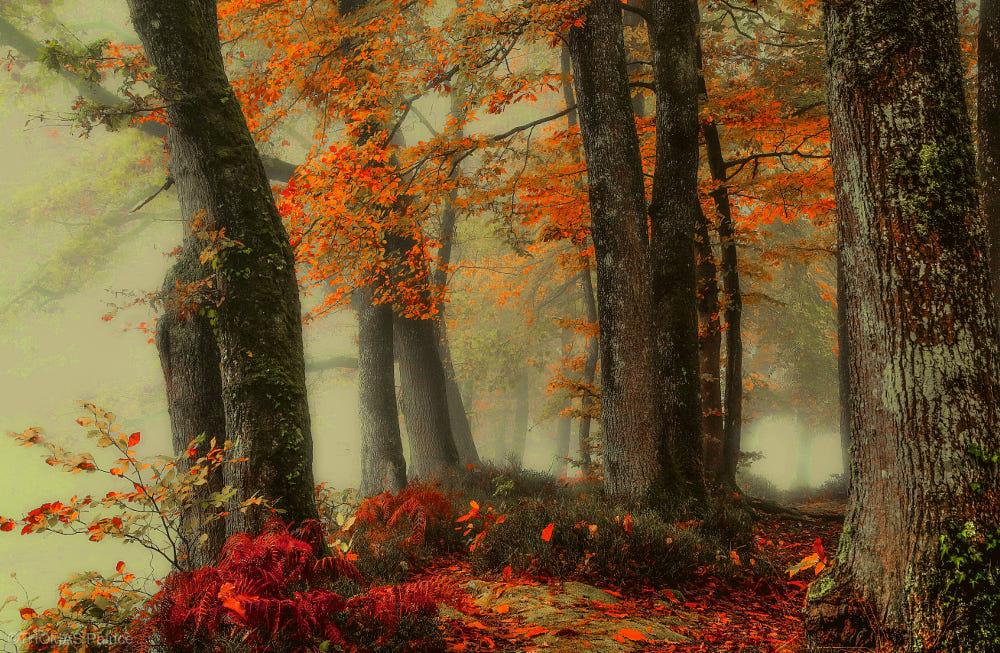 Autumn mood!