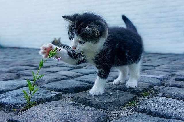 cat, flower, kitten