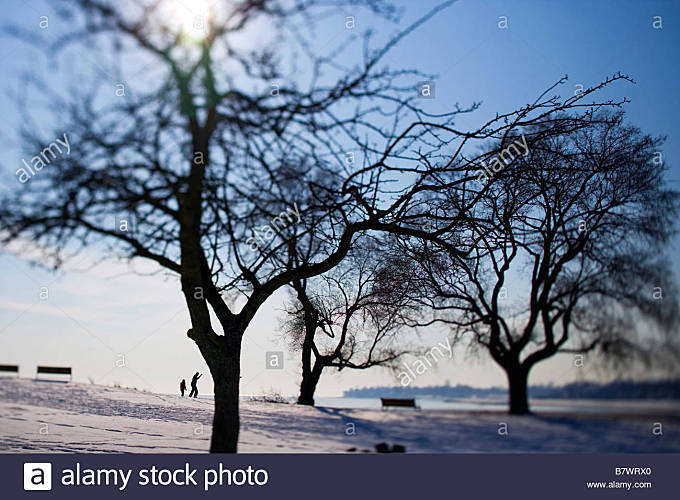 Trees in a park with a father and son skipping rocks in West Haven CT USA during the winter with snow - Stock Image