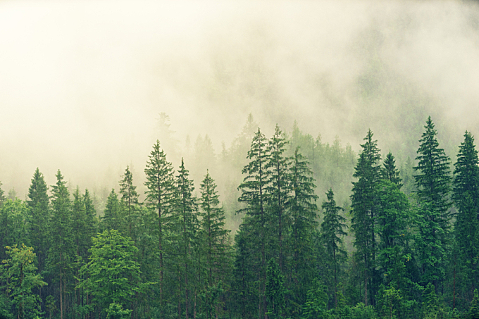 misty,  morning,  forest,  green,  mountain,  nature,  tall,  rain,  clouds,  view,  scenery