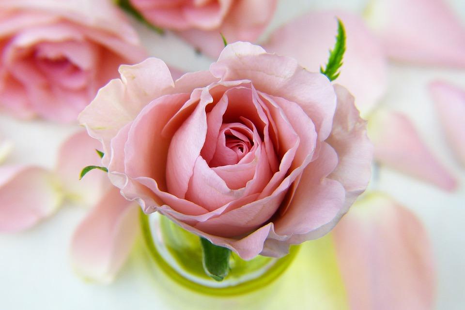 花, 玫瑰, 爱情, 花香, 花瓣, 粉红色, 油, 精油, 保佑你