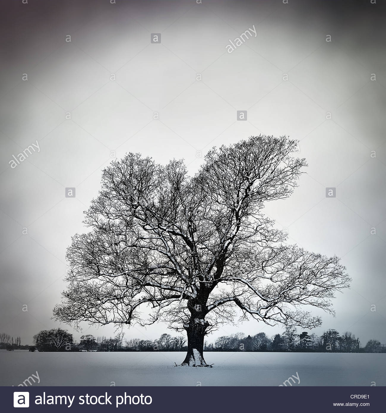 cold bare tree - Stock Image