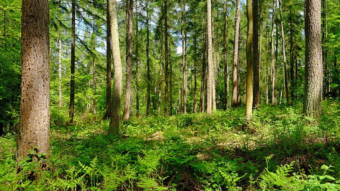 Forest, Fujifilm