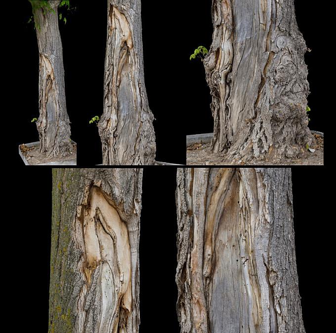 Photogrammetry Trees I