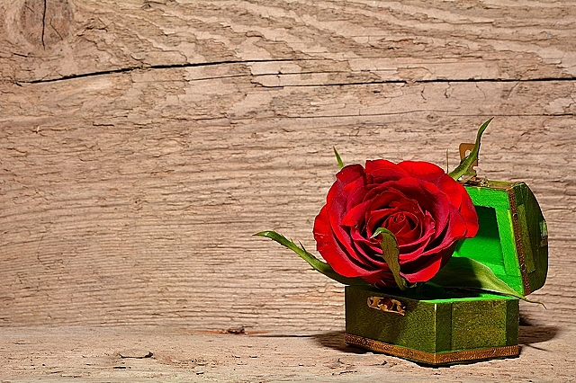 Red rose in the green box