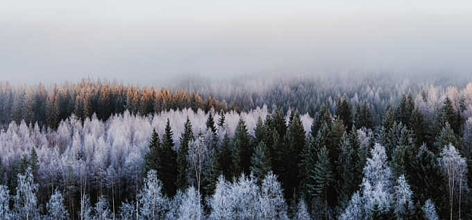 Over Frost Forest