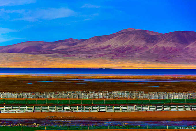 Namtso Lake and Colorful Field