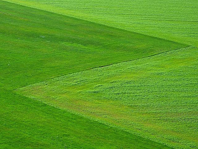 meadow, green, grass