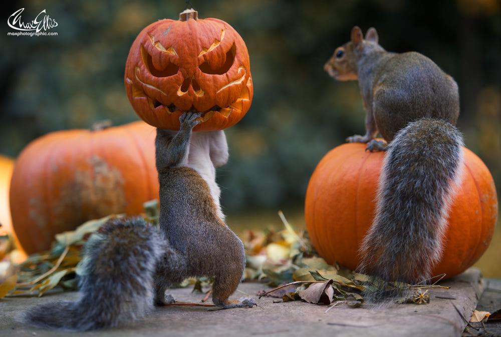 Flogging a Dead Pumpkin