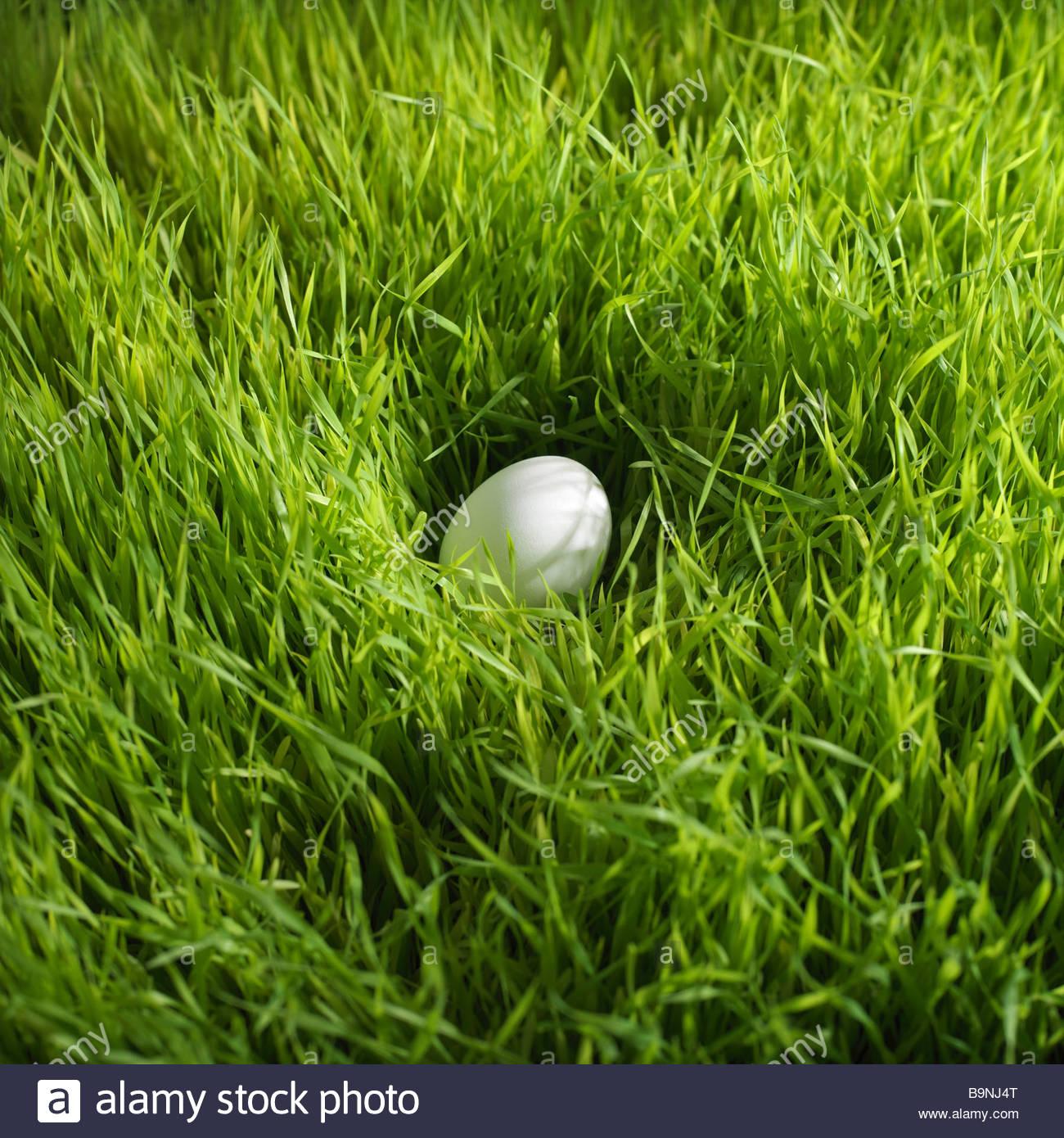 white Easter egg in grass - Stock Image