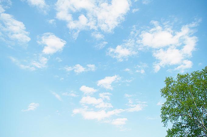 空と木のフリー写真素材