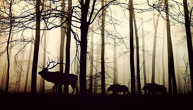 forest, fog, hirsch