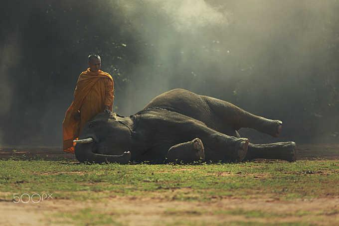 Monk with baby elephant