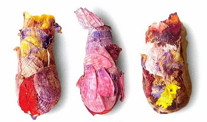 a special type of bee makes beautiful nests from flower petals