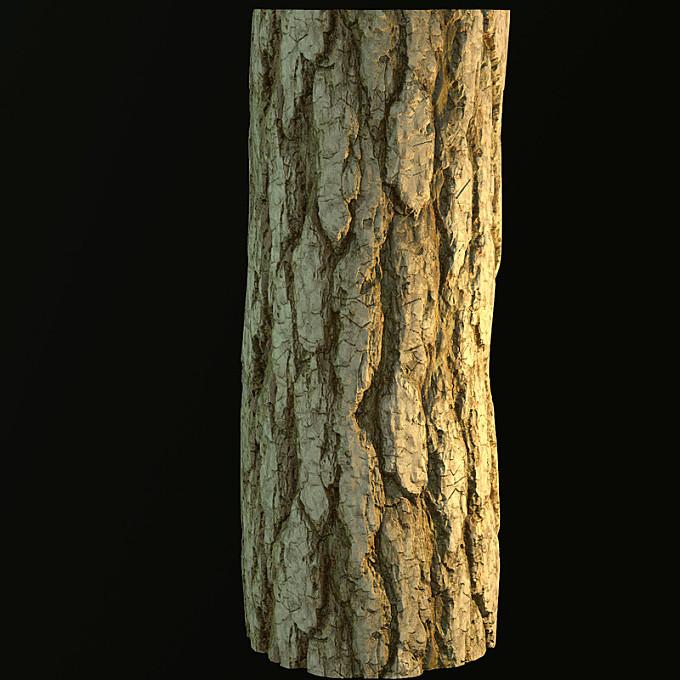 Substance Tree Bark