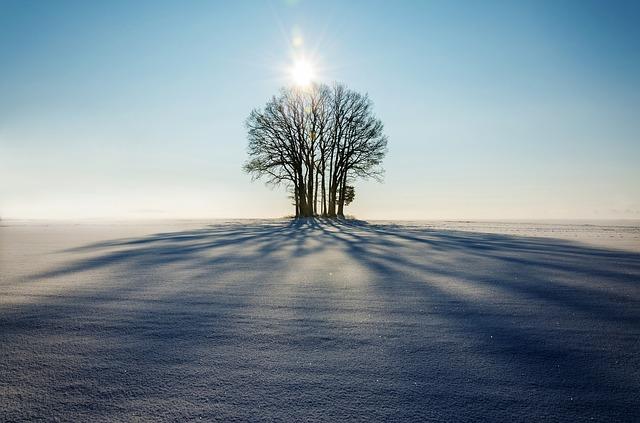 winter, landscape, tree