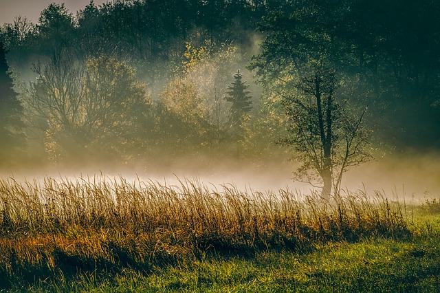 morning, fog, trees