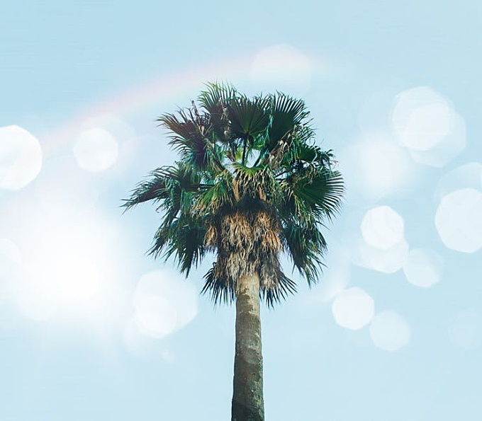 Low-angle Photography of Palm Tree